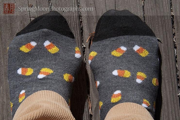 candy corn patterned socks